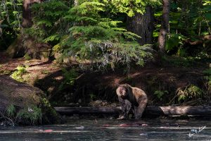 Bear in the Dark Forest Fishing - Brian Starseuth